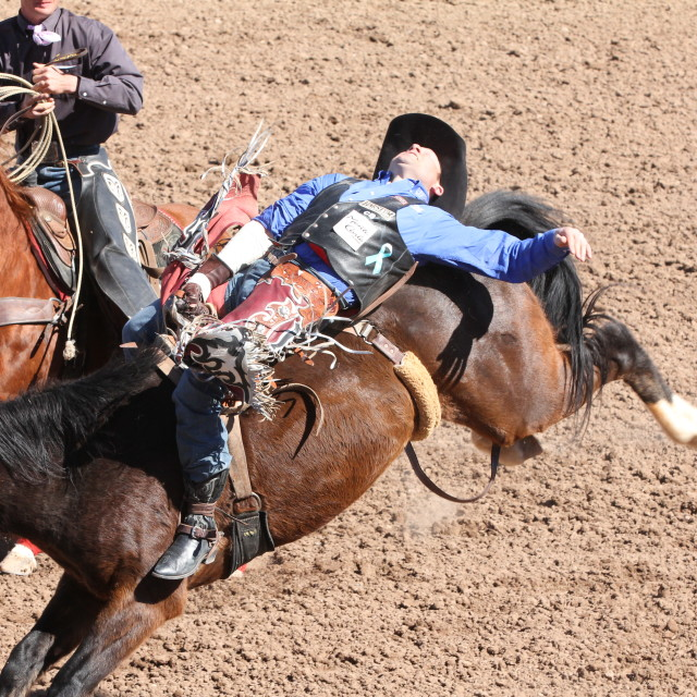 """""""Bucking Bronco Rider in a Rodeo"""" stock image"""