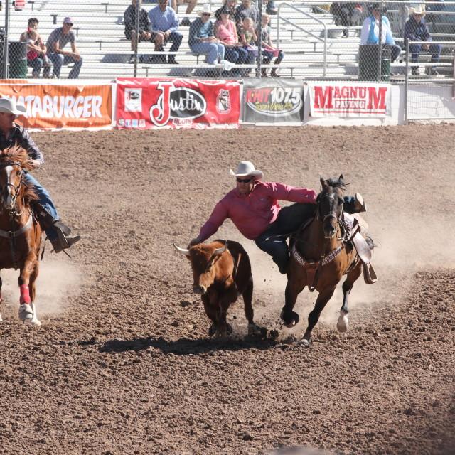 """""""Rodeo Calf Roping"""" stock image"""