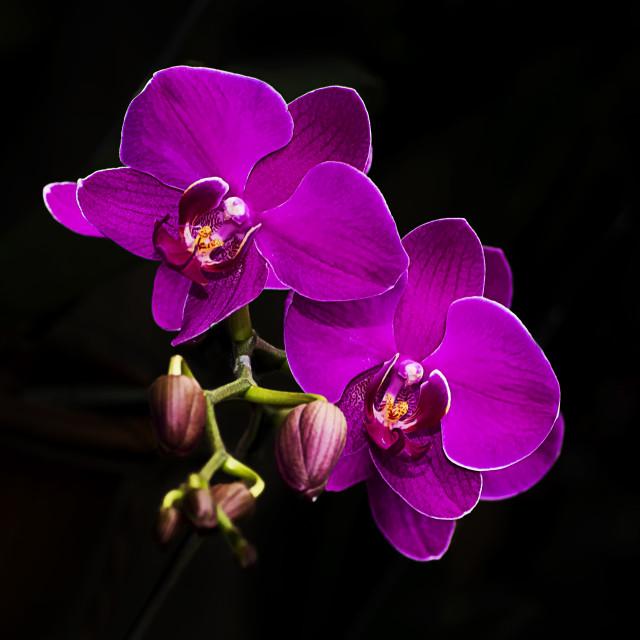 """""""Purple on black"""" stock image"""