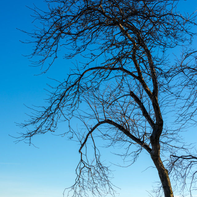"""""""Dead Tree and Frozen Lake"""" stock image"""