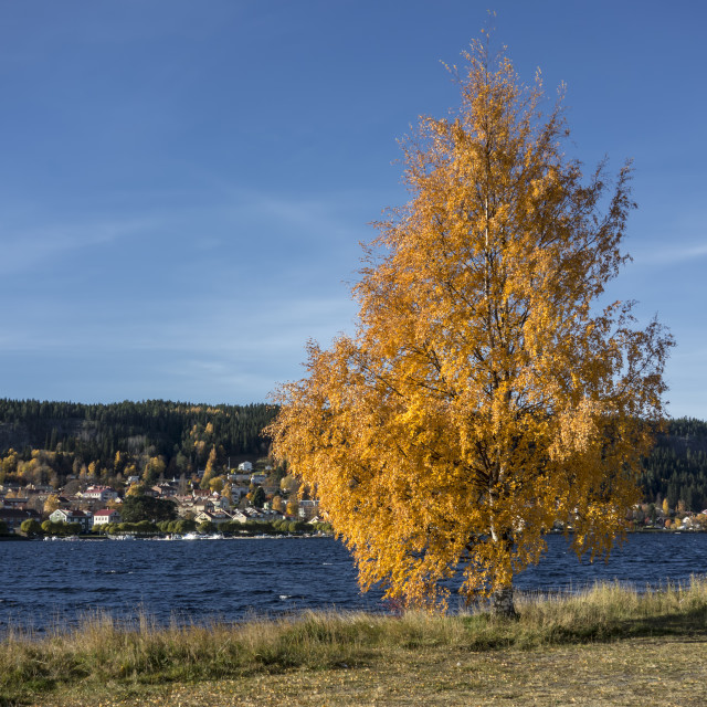 """Autumn Tree"" stock image"