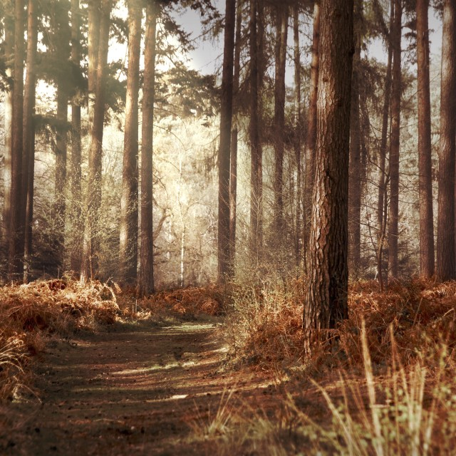 """Calm Woodland Scene"" stock image"