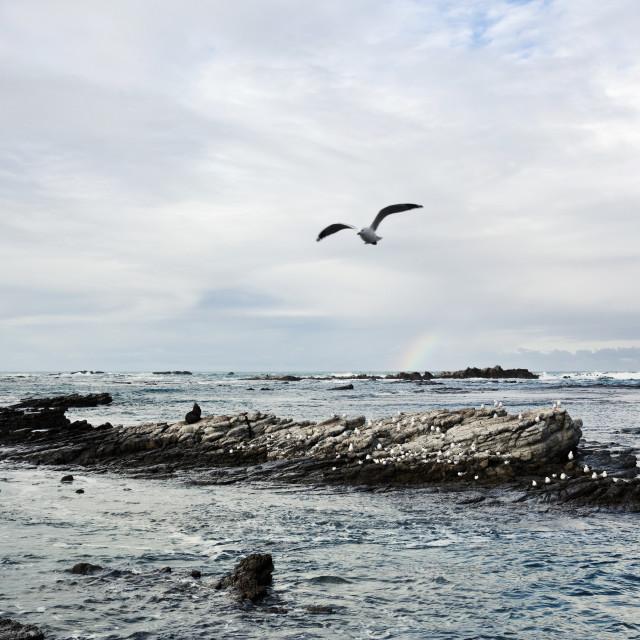 """Kaikoura Beach-1"" stock image"