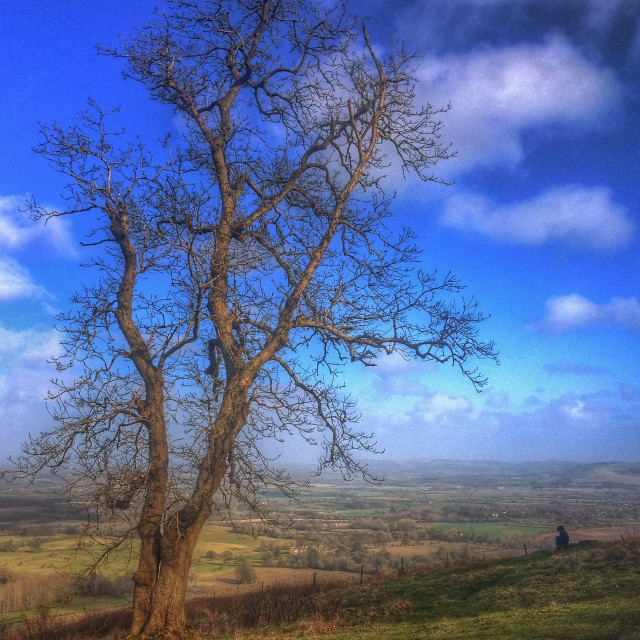 """Tree with what a view 2!!"" stock image"