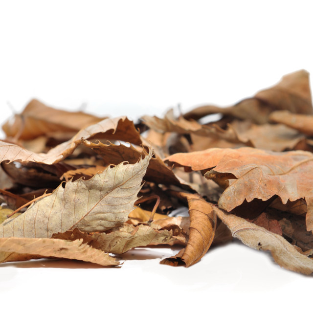 """dead leaves"" stock image"