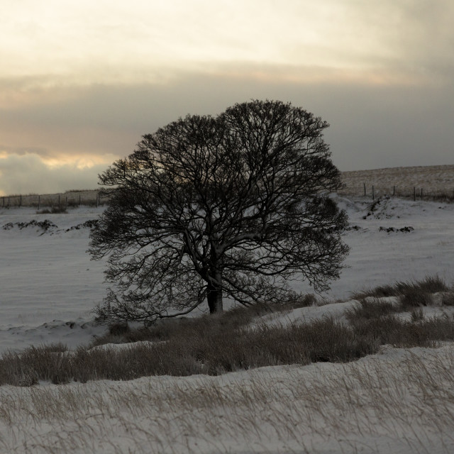 """A Winter Sunrise"" stock image"