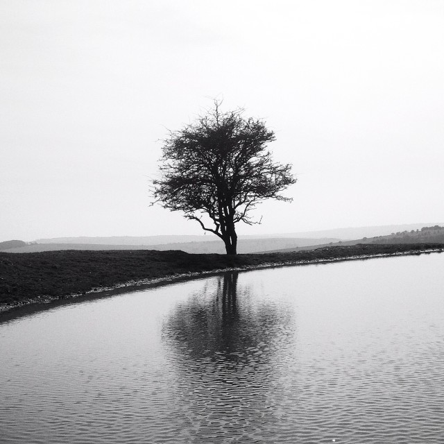 """Reflection of a lone Tree"" stock image"