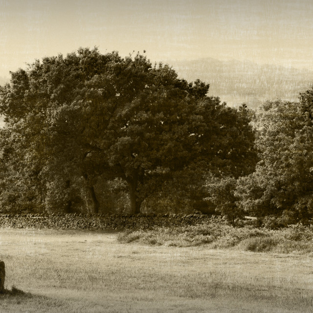 """Beacon Hil, Leicestershire, Sepia"" stock image"