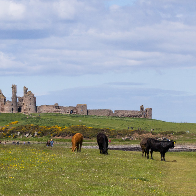 """Dunstanburgh Castle near Craster"" stock image"