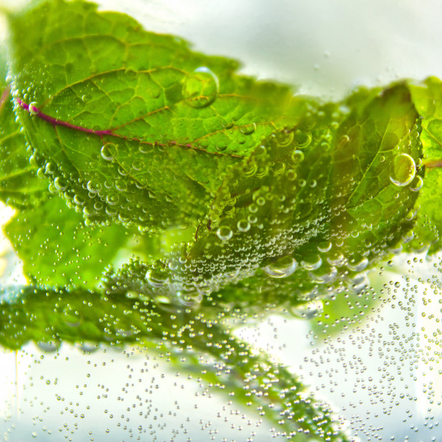 """Mojito mint leaves"" stock image"