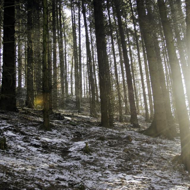 """Blinding Woods"" stock image"
