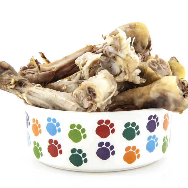 """Dog Bowl with bones on a white background"" stock image"