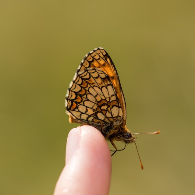 """Butterfly on a finger"" stock image"