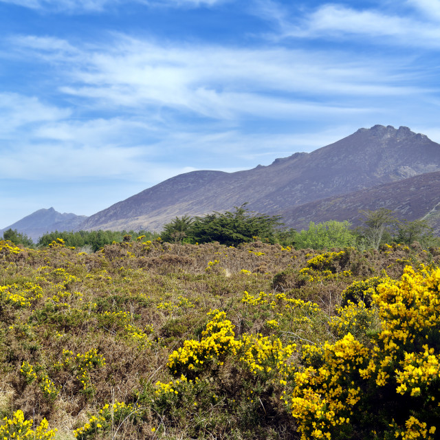 """""""The Mourne Mountains"""" stock image"""