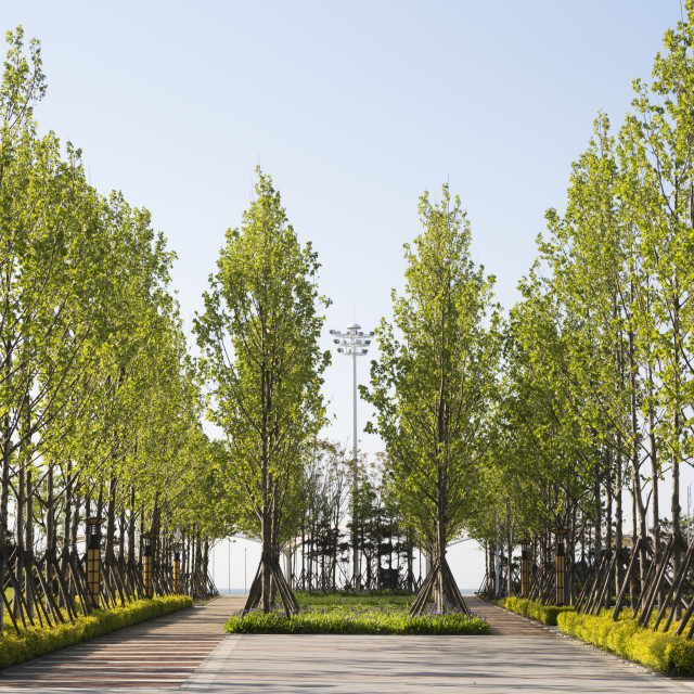 """Trees lining the walkways along Lingshan Bay's seaside"" stock image"