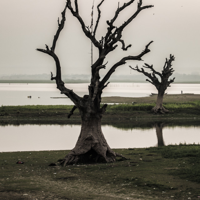 """""""lonely dead tree"""" stock image"""