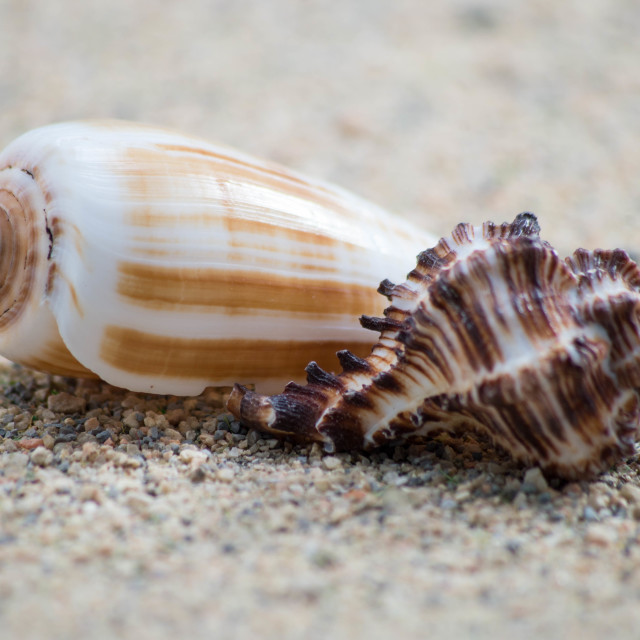 """Two Shells"" stock image"