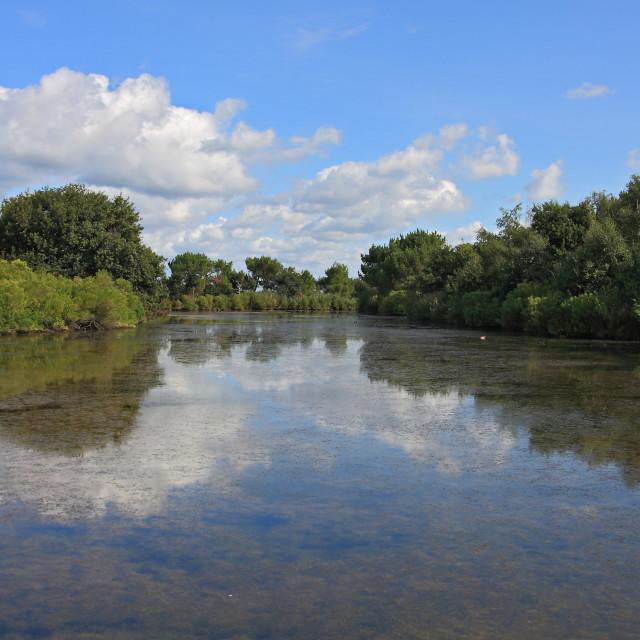 """Le Teich Ornithological Park"" stock image"