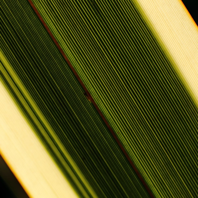 """Palm leaf"" stock image"
