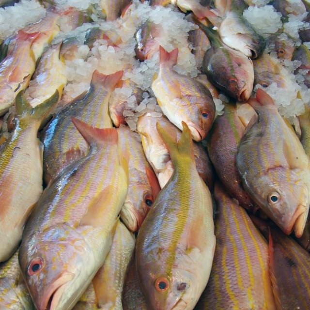"""Fresh Fish at the Market"" stock image"