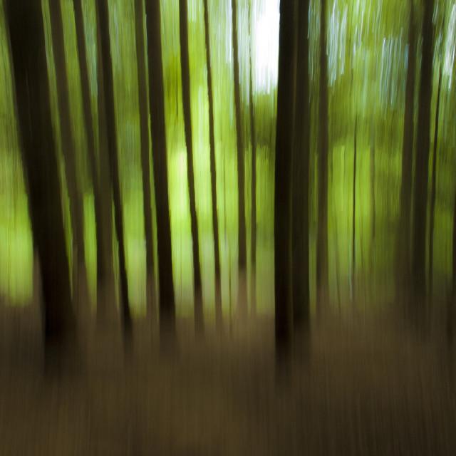 """""""Wild Woods"""" stock image"""