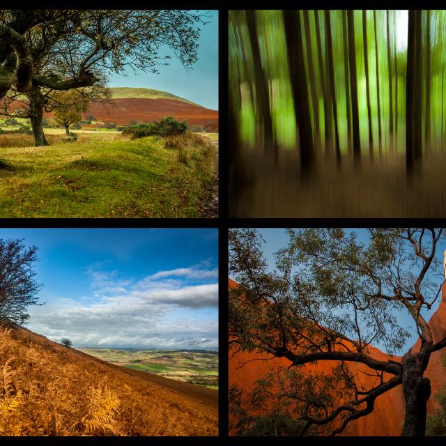 """Tree Montage"" stock image"