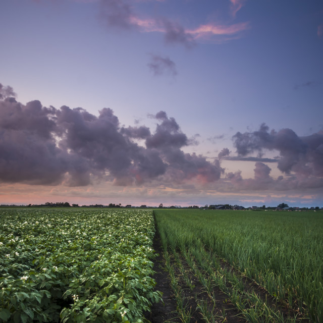 """""""Evening over the crop fields"""" stock image"""