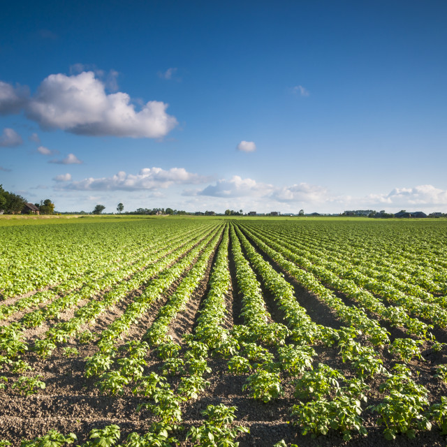 """""""A crop field"""" stock image"""