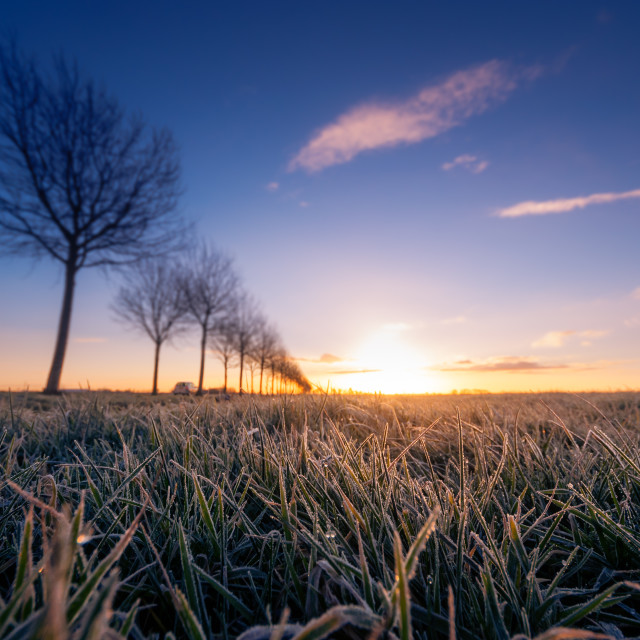 """Dew Sunrise"" stock image"