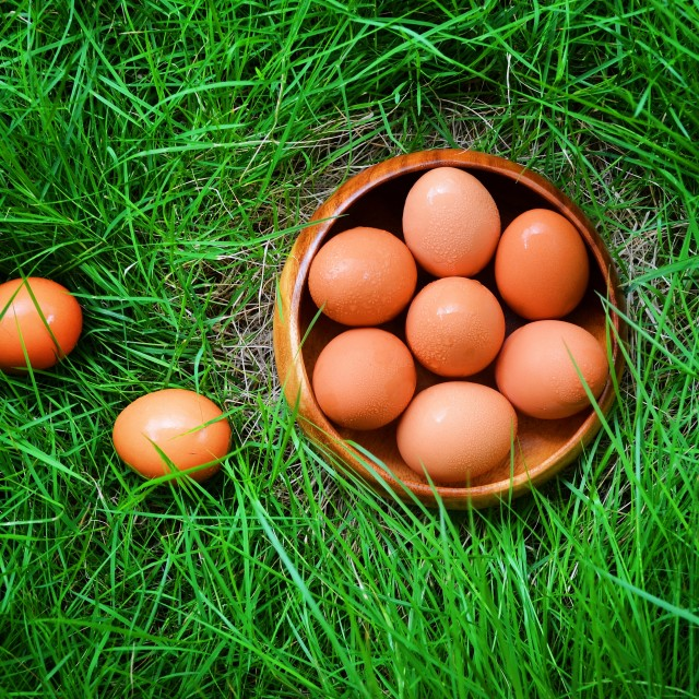 """Eggs on the green plants"" stock image"