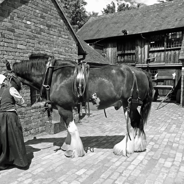 """""""Groom and shire horse"""" stock image"""