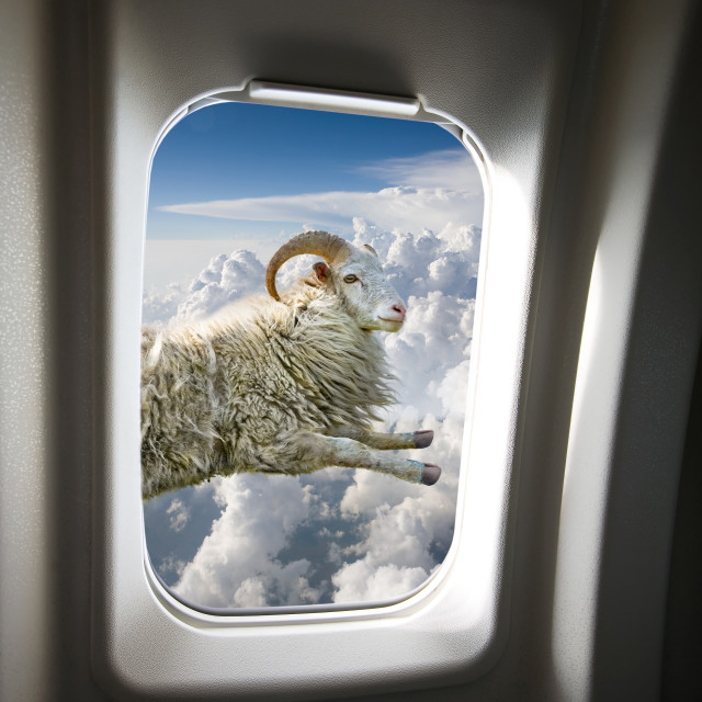 """Flying Sheep"" stock image"