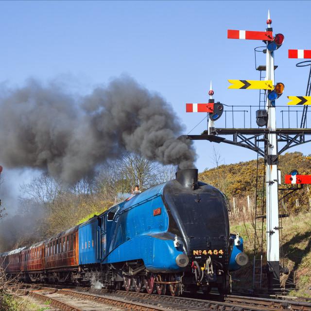 """Bittern passing a signal gantry"" stock image"