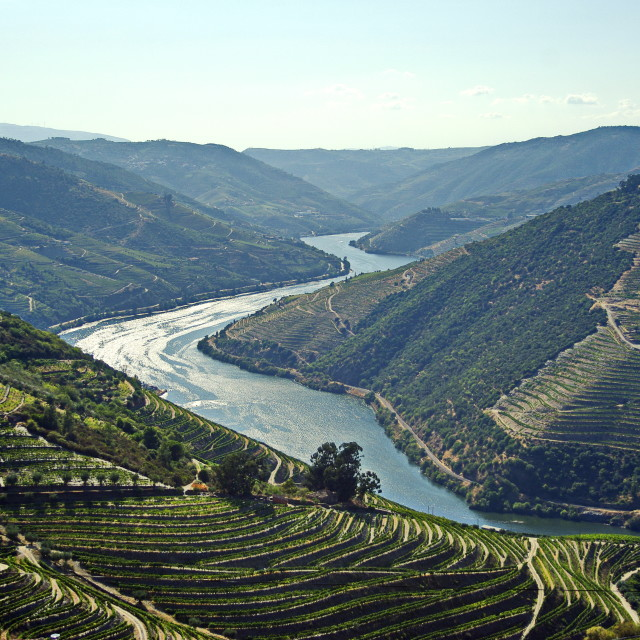 """Douro Valley"" stock image"