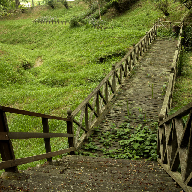 """""""Jungle Wooden Path"""" stock image"""
