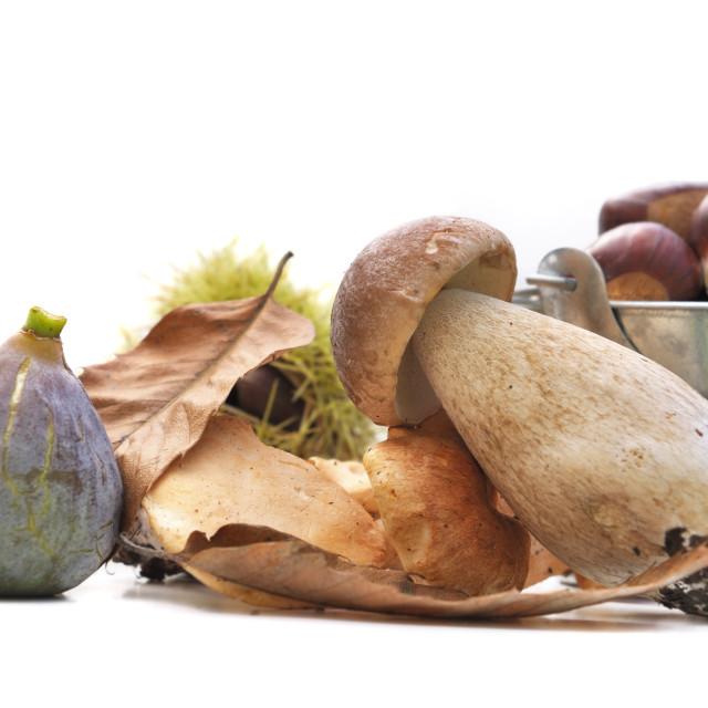 """autumnal fruit and porcini"" stock image"