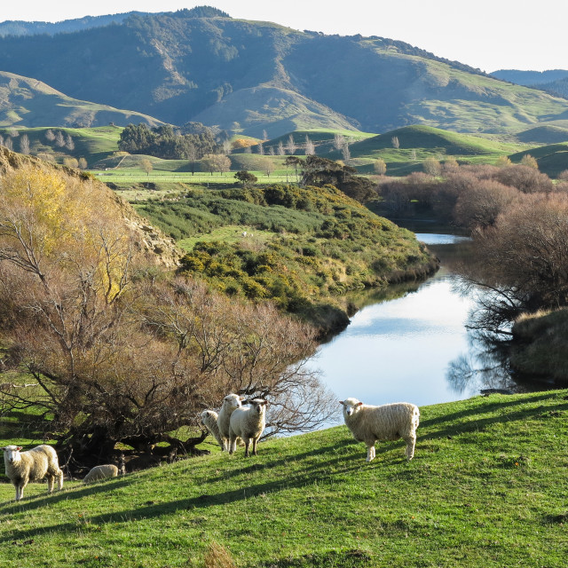 """riverside pasture"" stock image"