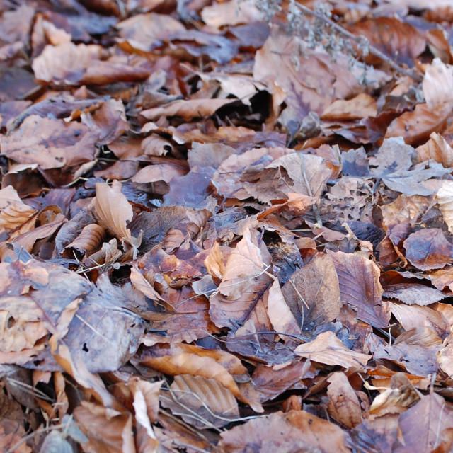"""""""Autumn leaf carpet"""" stock image"""