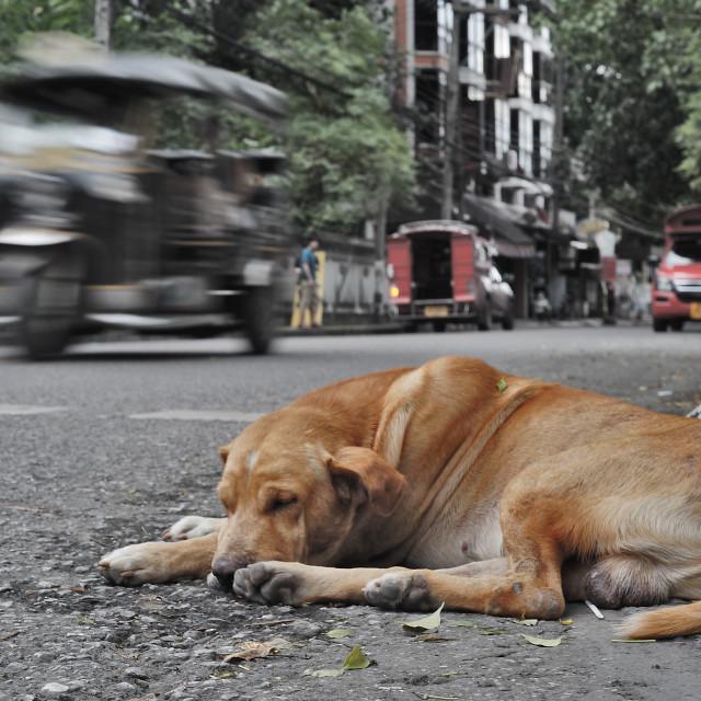 """Thailand Street Dog"" stock image"