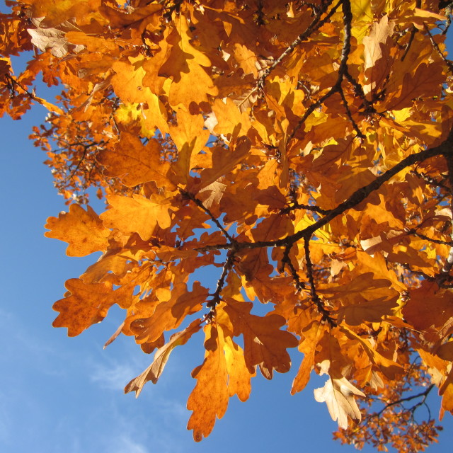 """Autumn orange"" stock image"