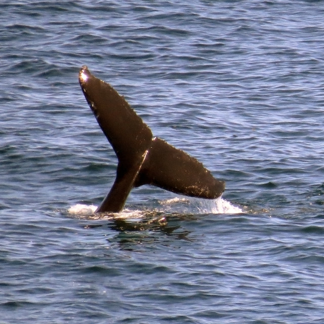 """""""Whale's Tail"""" stock image"""
