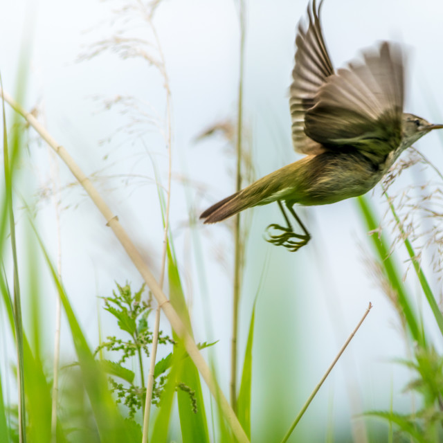 """Bird in flight"" stock image"