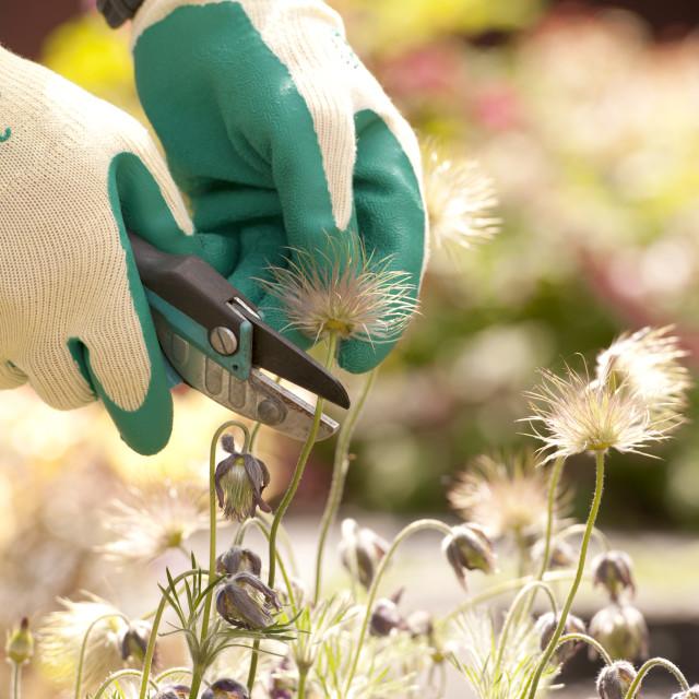 """""""gardener is working in his garden"""" stock image"""