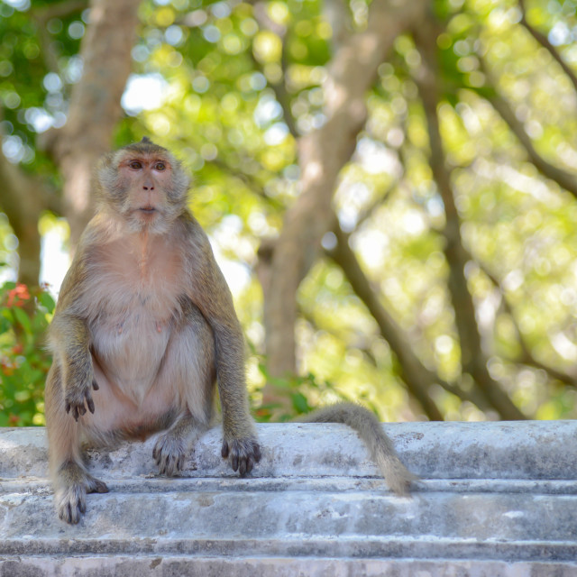 """monkey sit alone in the park"" stock image"