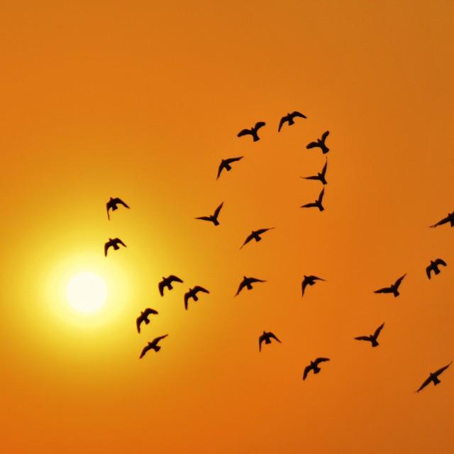 """""""Love Birds, Delhi"""" stock image"""
