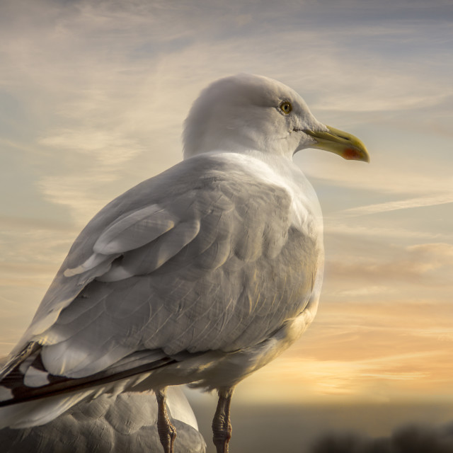 """From a seagull's point of view"" stock image"