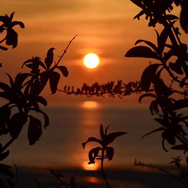 """""""Leafy Orange Sunrise"""" stock image"""