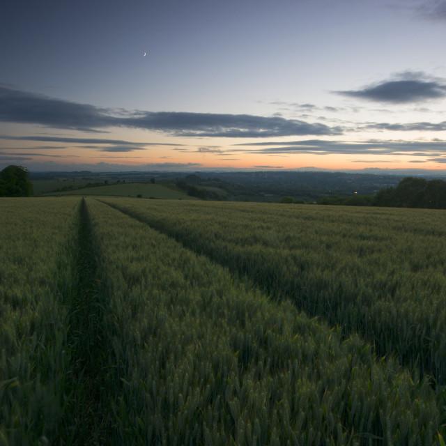 """Green wheat fields"" stock image"