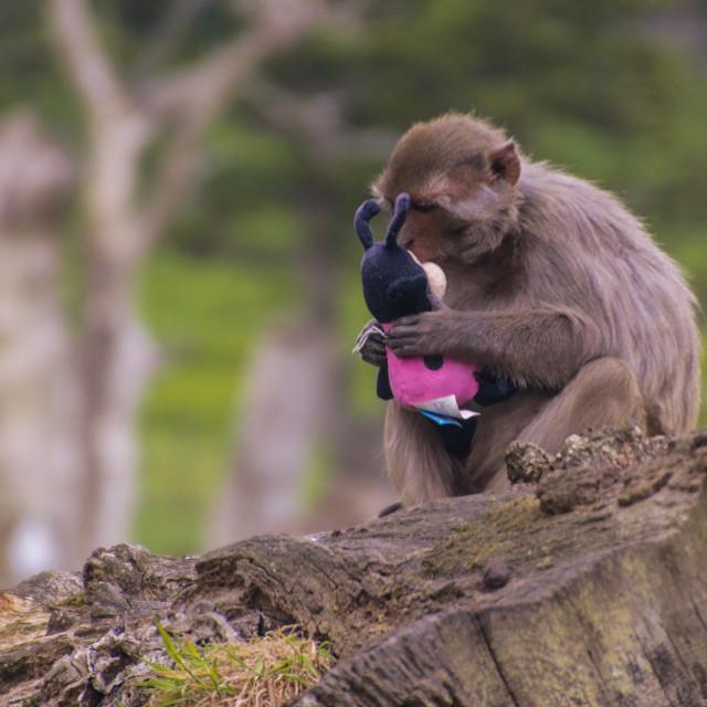 """Monkey and toy"" stock image"