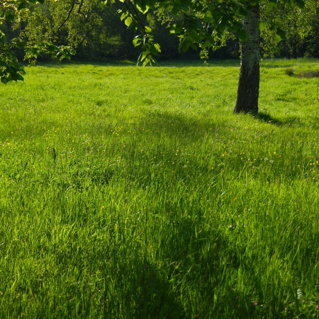 """Green meadow"" stock image"